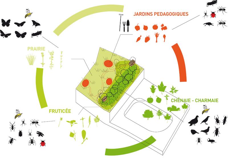 schema biodiversite